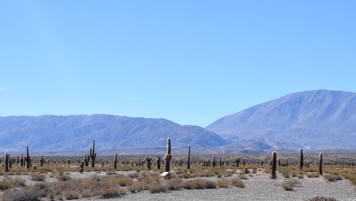 Cacti in Cachi Argentina