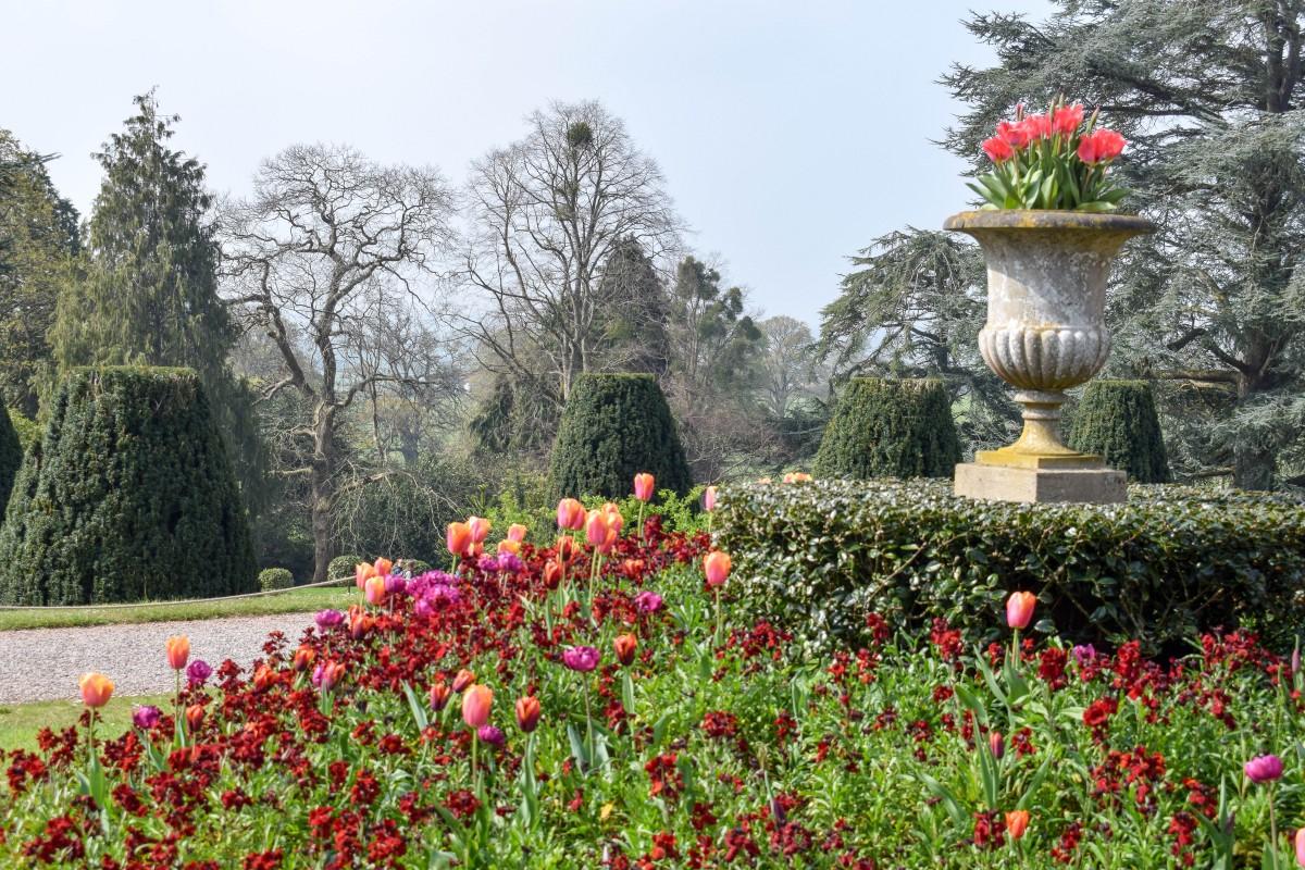 Spring flowers at Tyntesfield Bristol