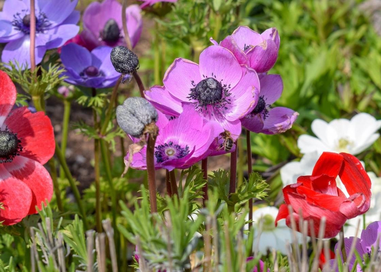 Bee on flower at Tyntesfield