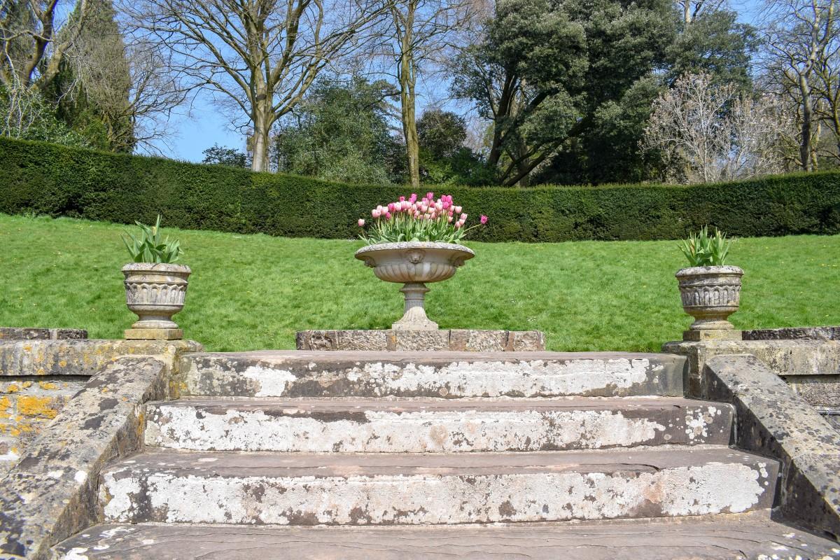 Rose garden Tyntesfield in Spring