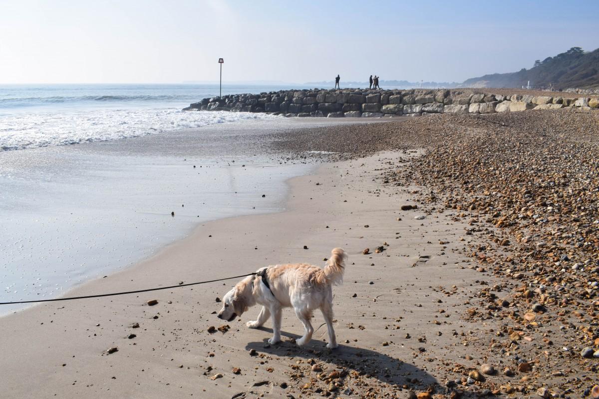 Dog friendly beach New Forest Highcliffe on Sea