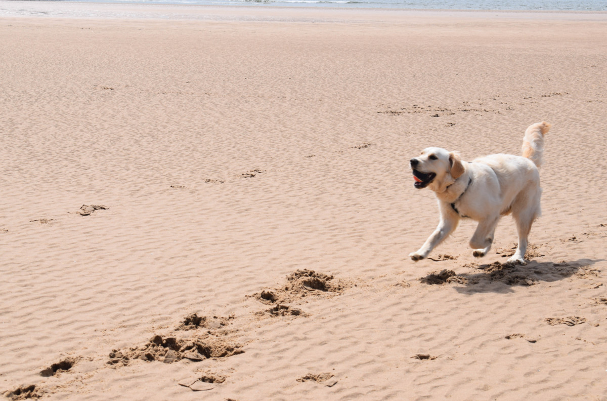 Three Cliffs Bay dog-friendly Gower Wales