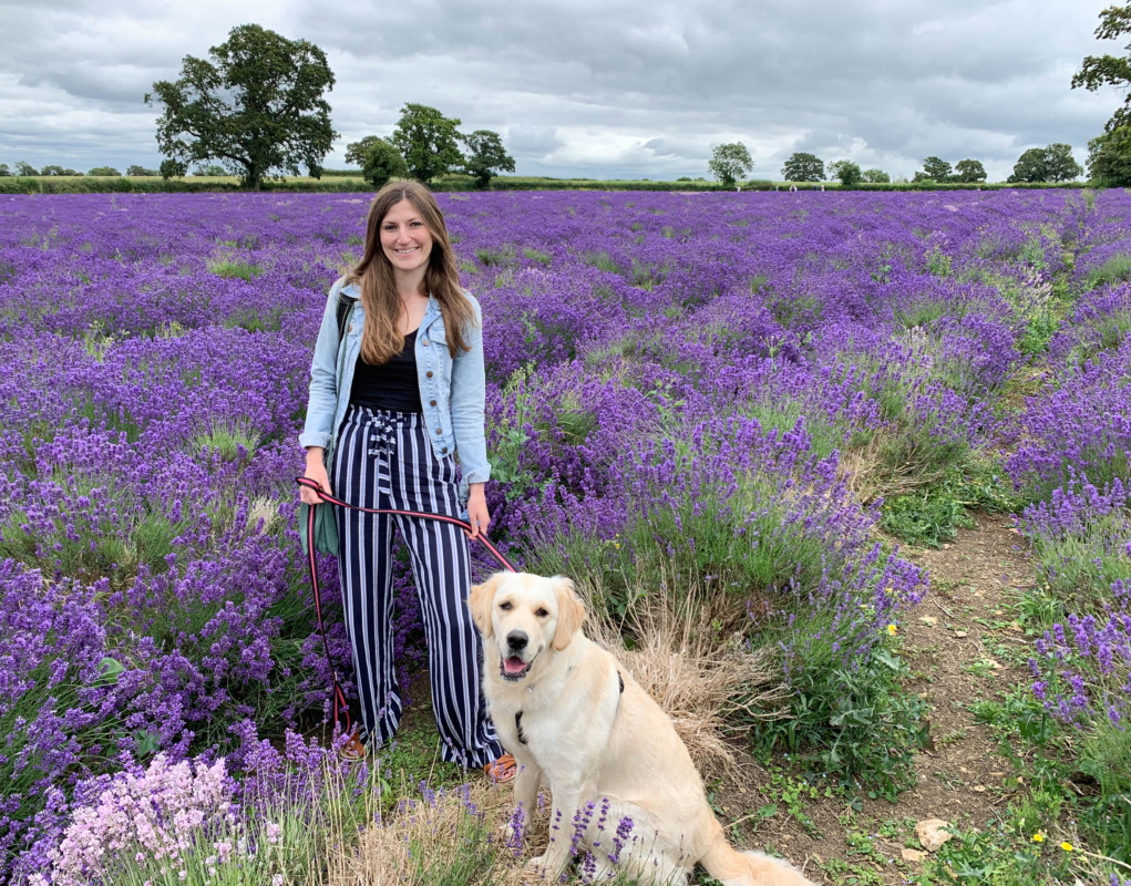 Somerset Lavender Farm dogs