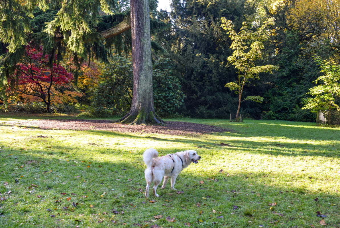 Dog friendly Westonbirt Arboretum-4