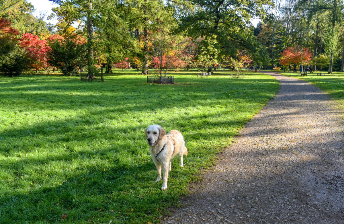 Dog friendly Westonbirt Arboretum-9