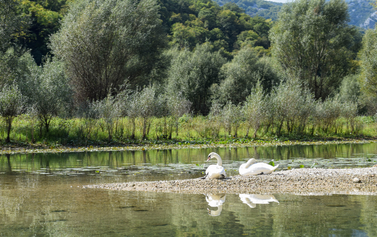 Lake skadar birds