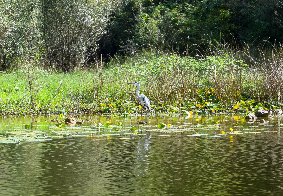 Lake Skadar birds Montenegro